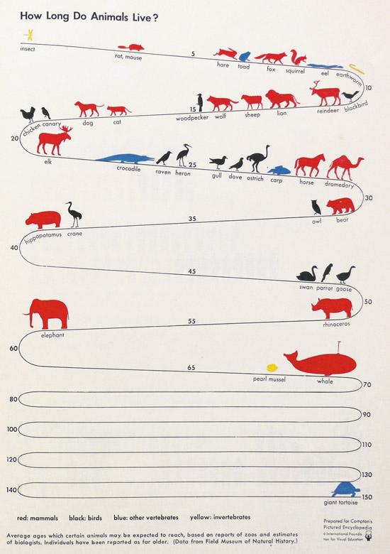 How Long Do Animals Live?