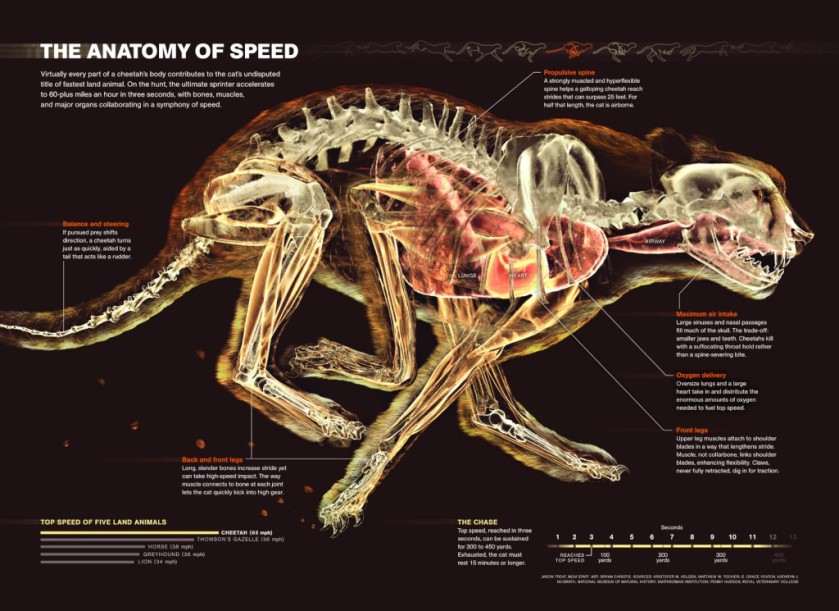 The Anatomy of Speed Infographic