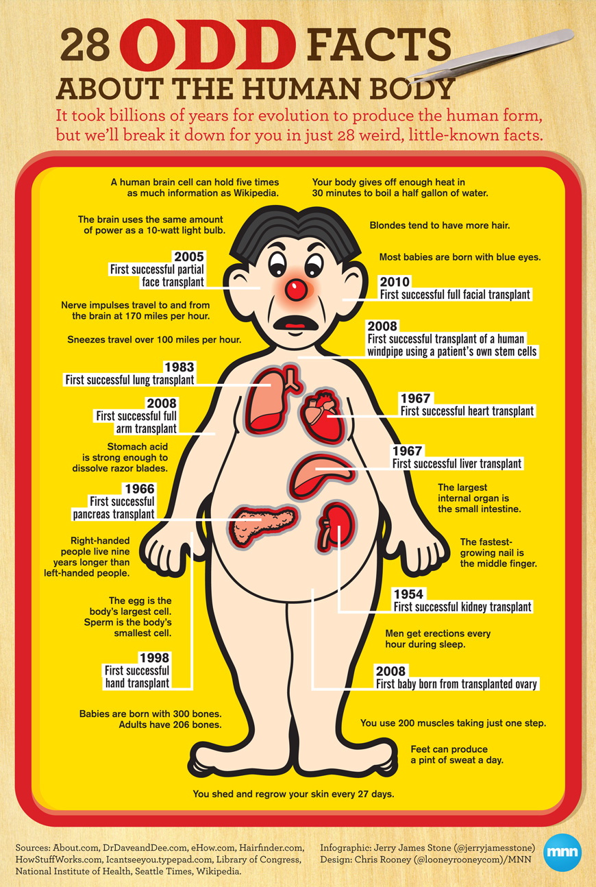 Odd-Human-Body-Facts-Infographic