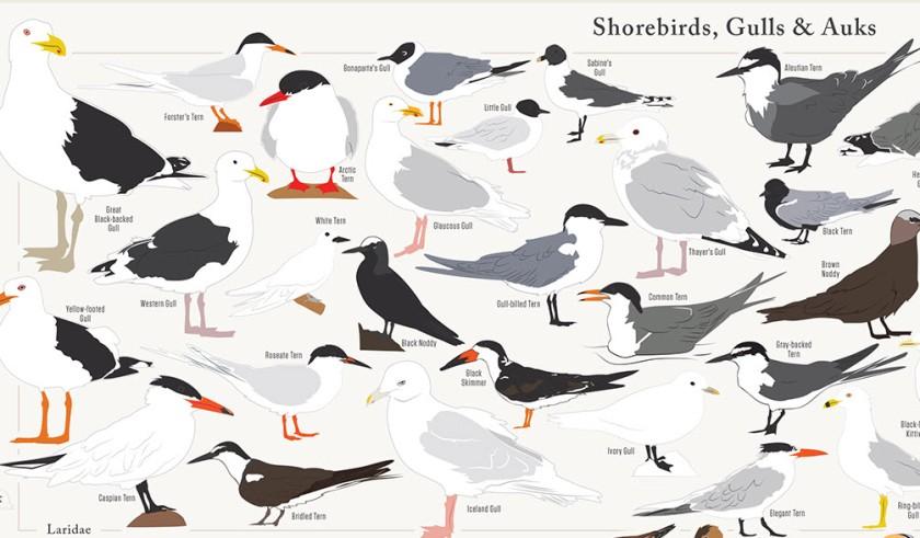 730 Birds Detail