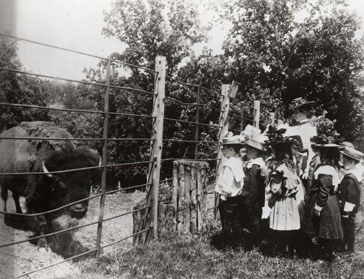 School Children with Bison - 1899
