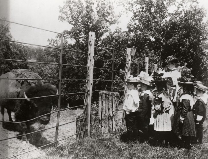 School Children with Bison - 1899