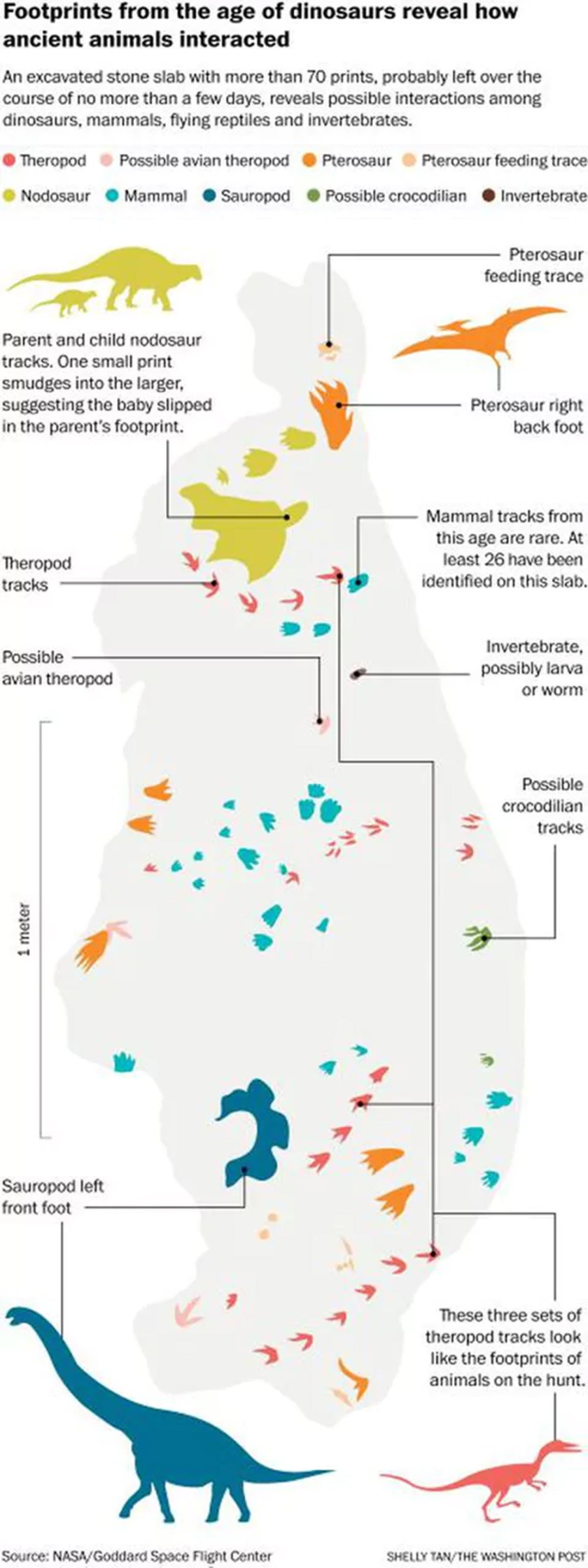 How Dinosaurs interacted with each other
