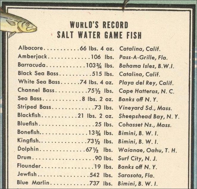 Big Game Fish Snippet - 3